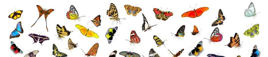 Casa delle Farfalle – RIAPERTURA!!!!!!