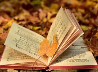 L'Albero dei Libri Centro di Lettura – Riapertura